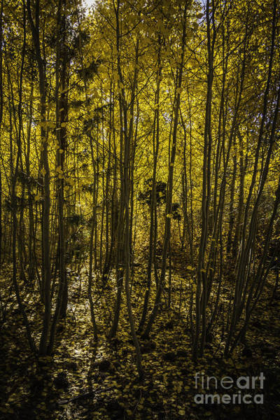 Thicket Photograph - Heart Of Autumn  by Mitch Shindelbower