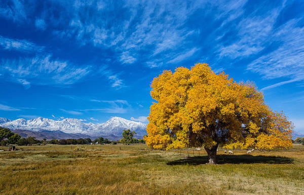 Photograph - Heart Of Bishop by Tassanee Angiolillo