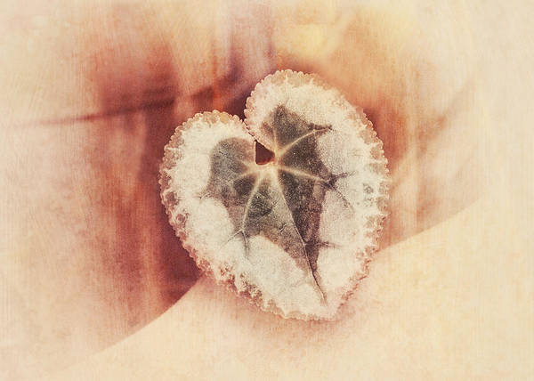 Wall Art - Photograph - Heart Of Nature by Susan Capuano
