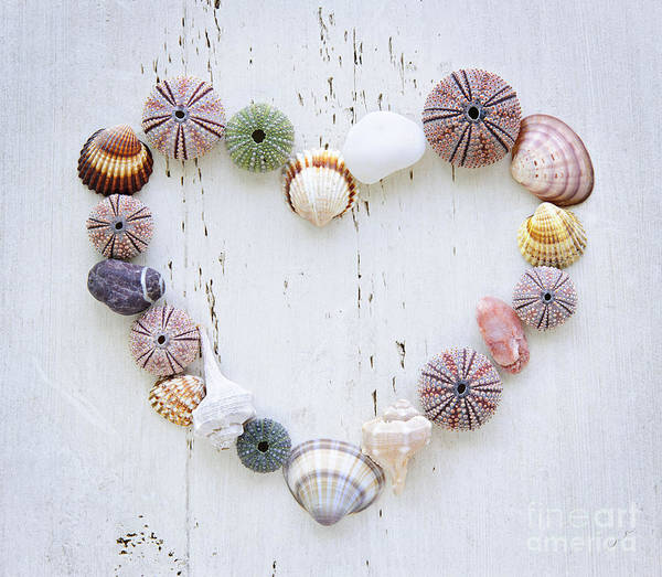 Heart Of Seashells And Rocks Art Print