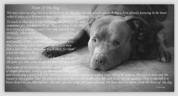 Wall Art - Photograph - Heart Of The Dog by Sue Long