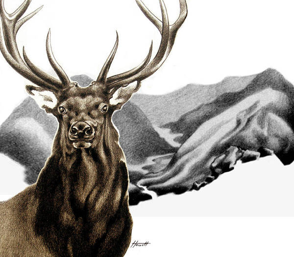 Elk Mountain Drawing - Heart Of The Hunted by Patricia Howitt