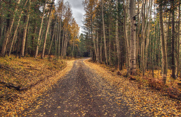 Photograph - Hart Prairie Aspens by Tam Ryan