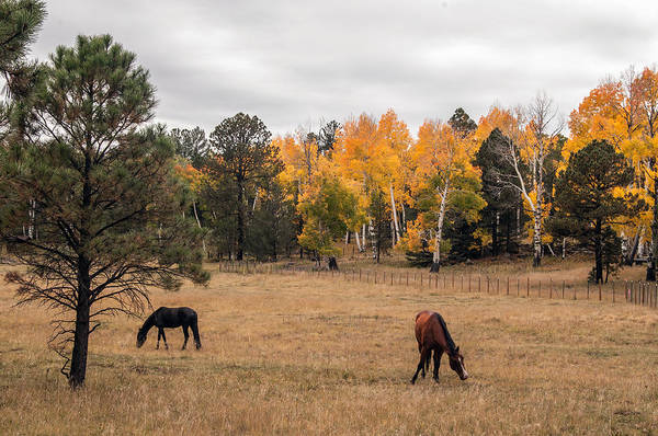 Photograph - Heart Prairie Horses by Tam Ryan