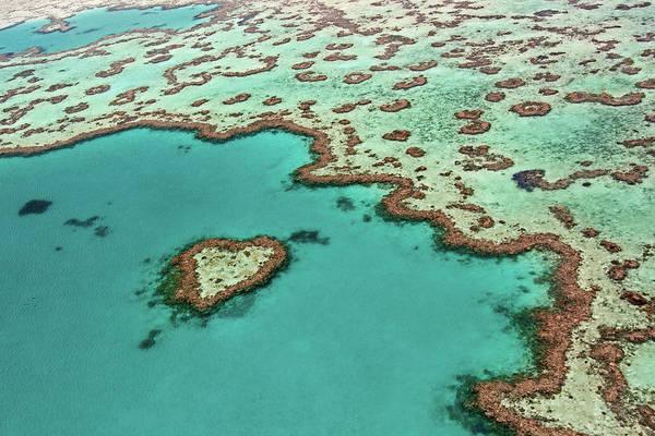 Reef Photograph - Heart Reef - Great Barrier Reef Aerial by Daniel Osterkamp