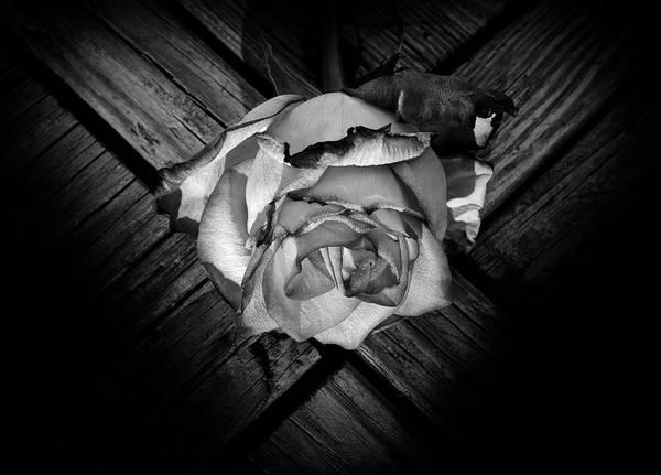 Wall Art - Photograph - Heart Rose by Luke Moore