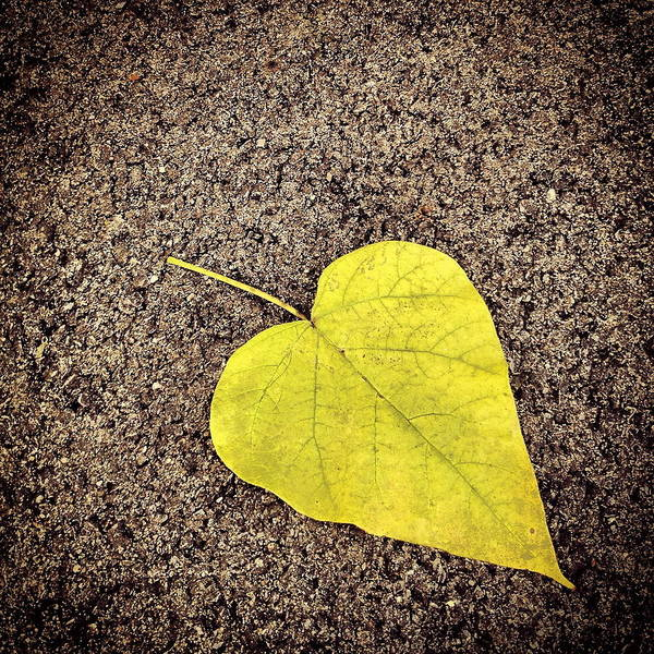 Heart Shaped Leaf On Pavement Art Print
