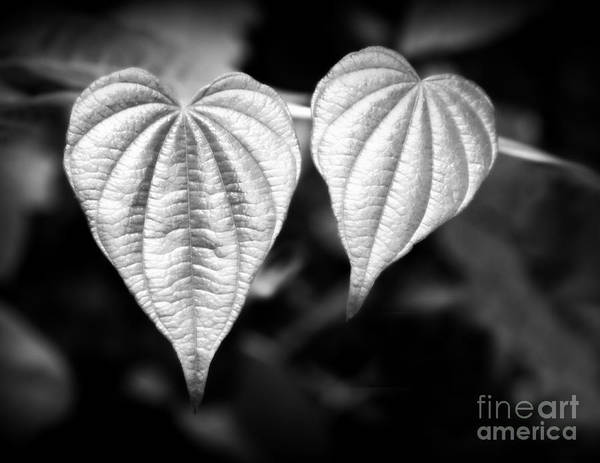 Photograph - Heart To Heart by Chris Scroggins