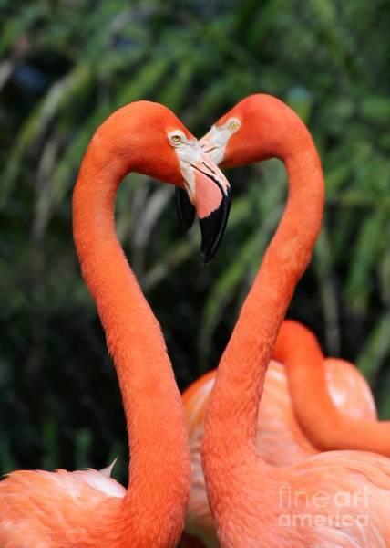 Heart To Heart Flamingo's Art Print