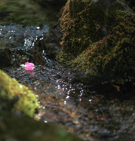 Bleeding Photograph - Heart's Journey by Aaron Aldrich