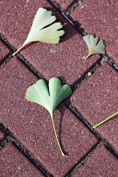 Photograph - Hearts On Brick by Jennifer Robin