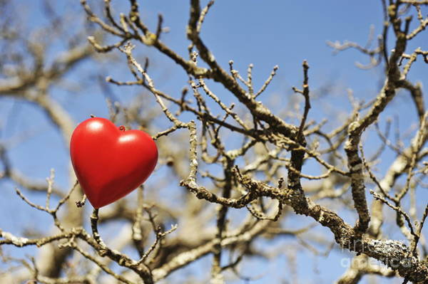 Wall Art - Photograph - Heartshape On Dead Tree Branches by Sami Sarkis