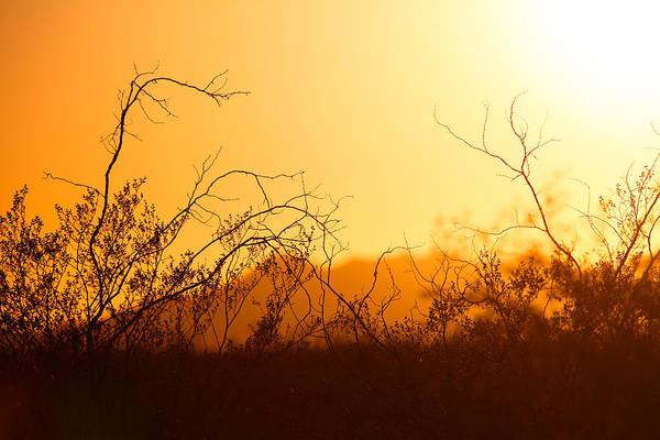 Photograph - Heat Of The Day by Brad Brizek