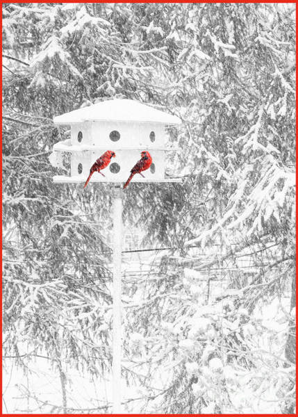 Photograph - Snowbirds by Geoff Crego