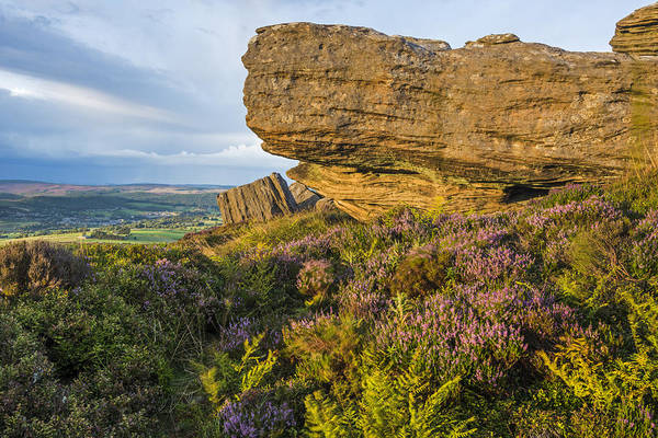 Northumbria Photograph - Heather Moorland by David Taylor