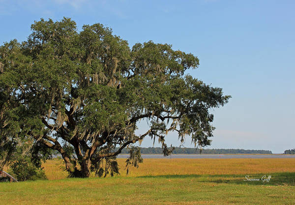 Coast Live Oak Photograph - Heaven Is A Beautiful Place by Suzanne Gaff
