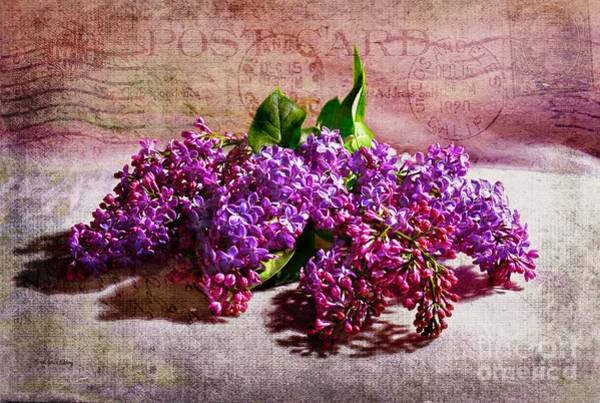 Photograph - Heaven Scent by Randi Grace Nilsberg