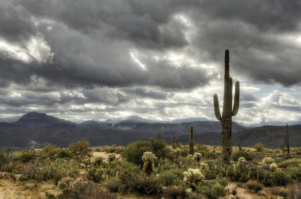 Sonoran Desert Photograph - Heavenly Desert Skies  by Saija  Lehtonen