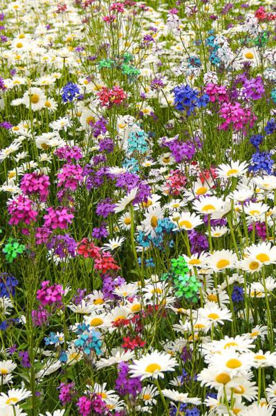 Photograph - Heavenly Flowers 2 by Larry Landolfi