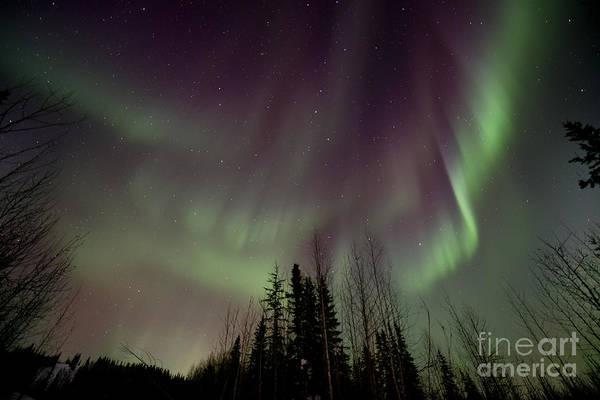 Yukon Photograph - Heavens Lights by Priska Wettstein