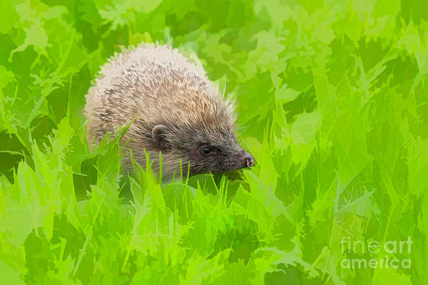 Wall Art - Photograph - Hedgehog Dreams by Louise Heusinkveld