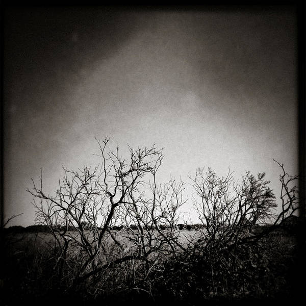 Iphoneography Wall Art - Photograph - Hedgerow by Dave Bowman