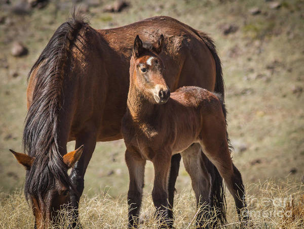 Mare And Foal Photograph - Heir To The Throne by Mitch Shindelbower