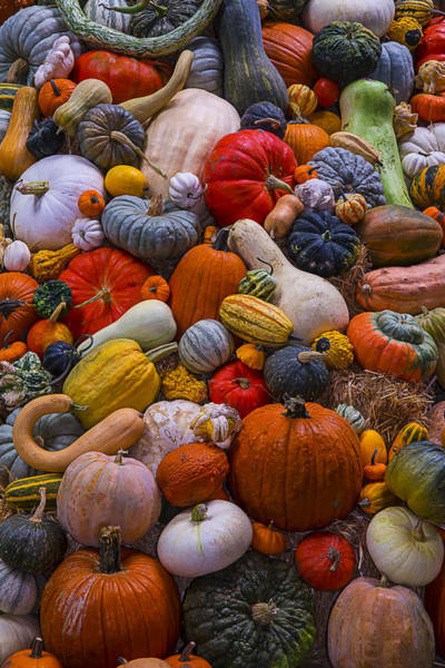 Gourd Photograph - Heirloom Harvest by Garry Gay