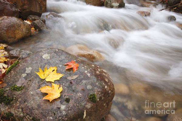 Photograph - Hellgate Brook - Pemigewasset Wilderness New Hampshire by Erin Paul Donovan