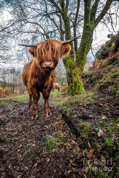 Photograph - Hello Cow by Adrian Evans