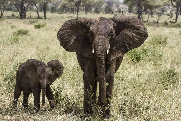 Photograph - Hello Elephants by Chris Scroggins