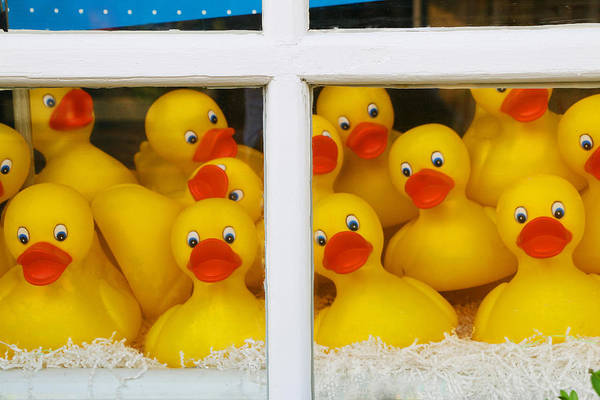 Rubber Ducky Photograph - Help We're Trapped In A Window Display And Can't Get Out by Allen Beatty