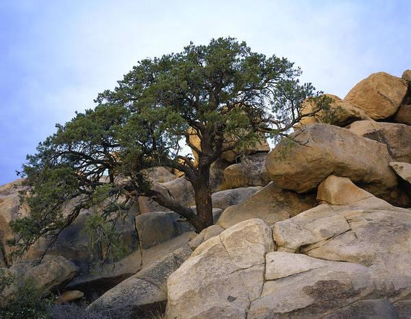 Photograph - Hemingway Tree by Paul Breitkreuz