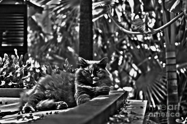 Photograph - Hemingways Cat by Susanne Van Hulst