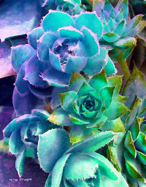 Moon Flower Photograph - Hens And Chicks Series - Deck Blues by Moon Stumpp