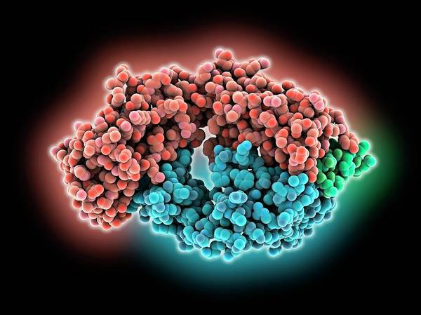 Antigen Photograph - Hepatitis C Glycoprotein And Antibody by Laguna Design