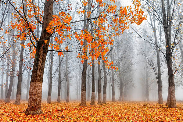 Wall Art - Photograph - Heralds Of Autumn by Evgeni Dinev
