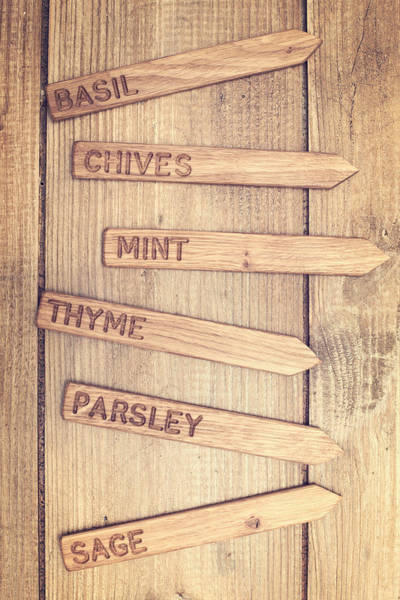 Allotment Wall Art - Photograph - Herb Labels by Amanda Elwell
