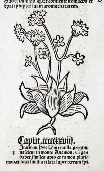 Encyclopedia Wall Art - Photograph - Herbal Plant by Paul D Stewart