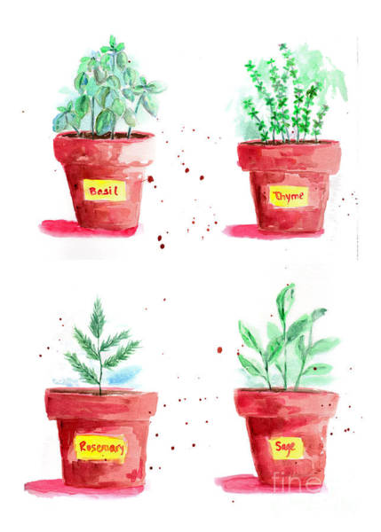 Rosemary Painting - Herbal Plants Basil Thyme Sage Rosemary by Patricia Awapara