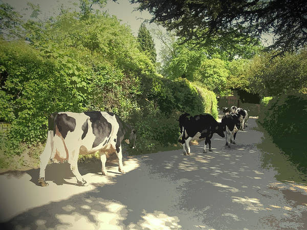 Herd Drawing - Herd Of Cows On Morley Lane In Stanley, Seconds After This by Litz Collection