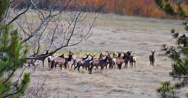 Digital Art - Herd Of Elk by Susan Kinney