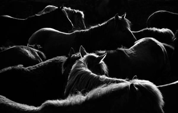 Herd Of Horses Wall Art - Photograph - Herd Of Horse by Okeyphotos