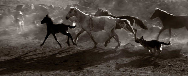 Herd Of Horses Wall Art - Photograph - Herd Of Horse Running by Okeyphotos