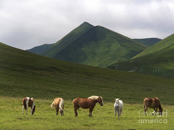 Dome Peak Photograph - Herd Of Horses. The Sancy Massif. Auvergne. France. City	 by Bernard Jaubert