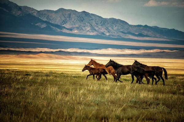 Herd Of Horses Wall Art - Photograph - Herd Of Wild Horses In Kazakhstan by Nutexzles