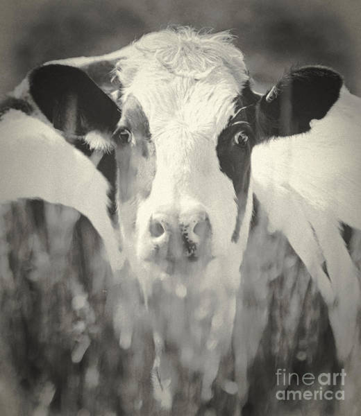 Wall Art - Photograph - Herd You by Roger Bailey