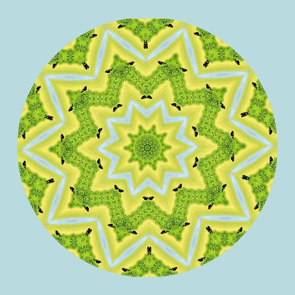 Here Birdie Birdie Mandala Art Print