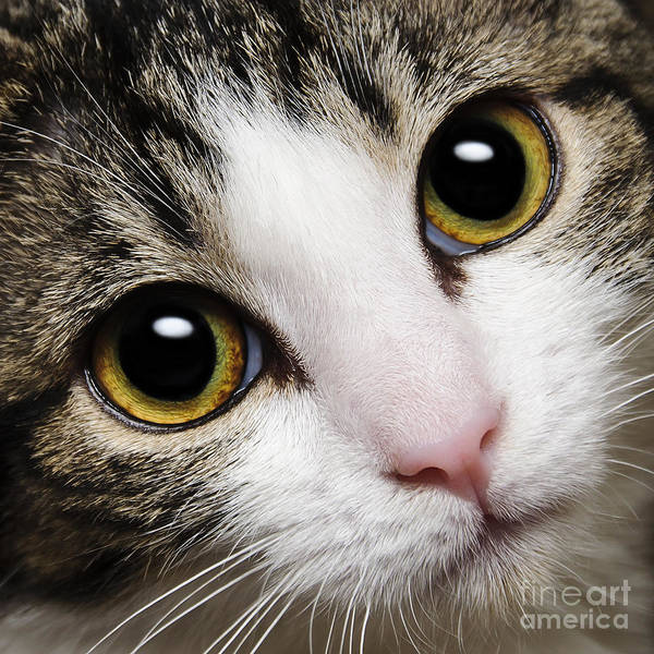 Andee Photograph - Here Kitty Kitty Close Up by Andee Design