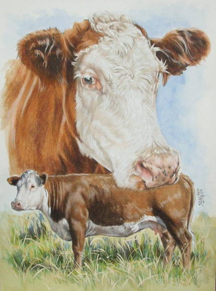 Mixed Media - Hereford Cattle by Barbara Keith